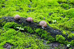Snail in tropical rain forest. Snails in tropical rain forest Stock Photo