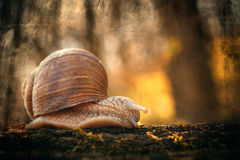 Snail. On the trunk with grunge effect Royalty Free Stock Images