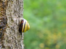 Snail on trunk in nature Royalty Free Stock Images