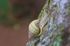 Snail on the trunk tree Stock Images