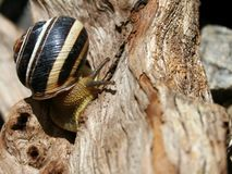 Snail on the trunk of the tree stock photography