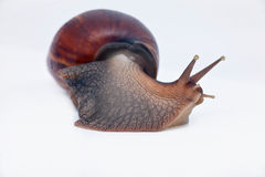 Snail turn left on the way Stock Photo