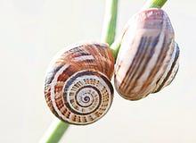 Snail. 2014 Tuscany Maremma Italy Macro Stock Photo