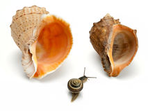 Snail and two sea cockleshells Royalty Free Stock Photos