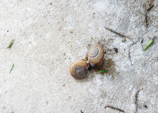 Snail. Two snails eat died snail Royalty Free Stock Image