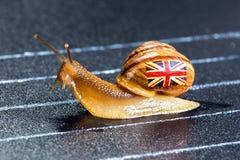 Snail under British flag on sports track Stock Photo