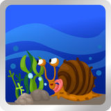Snail underwater Royalty Free Stock Photos