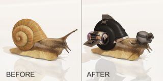 Snail, before and after upgrade stock illustration