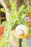 Snail vases hang on tree. Royalty Free Stock Image