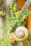 Snail vases hang on tree. Stock Photo