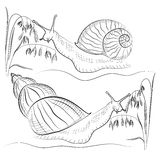 Snail vector Royalty Free Stock Photography