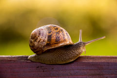 Snail waiting for a miracle. Stock Images