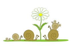 Snail for a walk Royalty Free Stock Photos