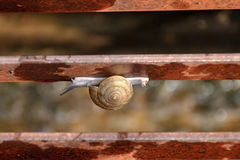 Snail walking on the fence Stock Images