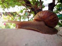 Snail walking forward royalty free stock photos