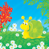 Snail walking on the green glade. The yellow-green snail walks on the sunny glade studded with camomiles Royalty Free Stock Photos
