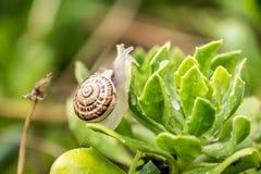 Snail on leaf Stock Photo