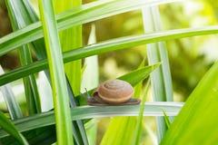 Snail walking on leaf Stock Photo