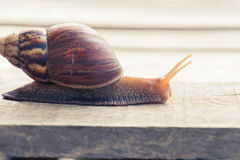 Snail walking Stock Images