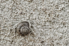 Snail on a wall Stock Images
