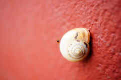 Snail on wall Stock Photo