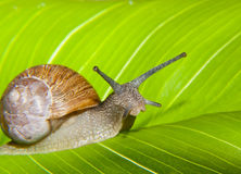 Snail watching Stock Image