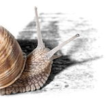 Snail is watching Royalty Free Stock Photography