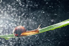 Snail with water particles as the background Stock Photo