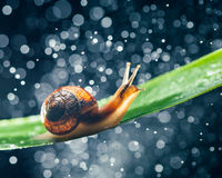 Snail with water particles bokeh Stock Image