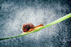 Snail with water particles bokeh Royalty Free Stock Images