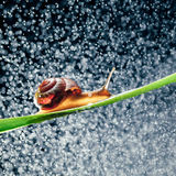 Snail with water particles bokeh Royalty Free Stock Photo
