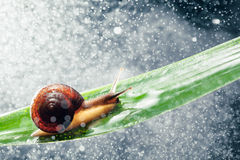 Snail with water particles bokeh Stock Images
