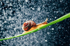 Snail with water particles bokeh Stock Photography