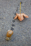 Snail on the way Royalty Free Stock Photography