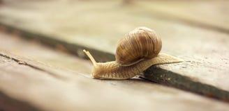 Snail website banner Stock Photo