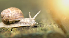 Snail website banner Stock Photos