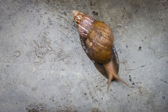 The snail on the wet concrete floor. Royalty Free Stock Photos