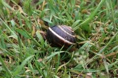 Snail on a wet grass Stock Photos