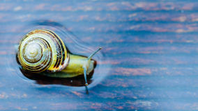 Snail on the wet terrace Stock Photography