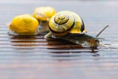 Snail on the wet terrace Stock Photo