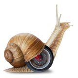 Snail on wheels Stock Images