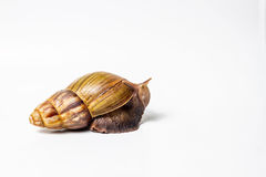 Snail. On a white background Royalty Free Stock Images
