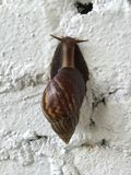 Snail on white concrete Royalty Free Stock Photography