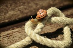 Snail on White Square Knot Rope Stock Images