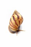 Snail on whte Stock Image