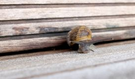 Snail with wide eyes stock photo