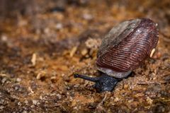 Snail Close Up Royalty Free Stock Photos