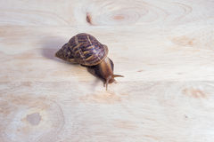 Snail on wood stock images