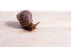 Snail on wood stock photos