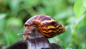 Snail on the wooden in the garden Royalty Free Stock Photo